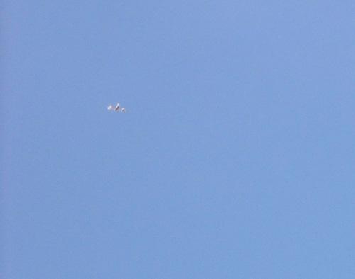 コブラワン飛ぶ2