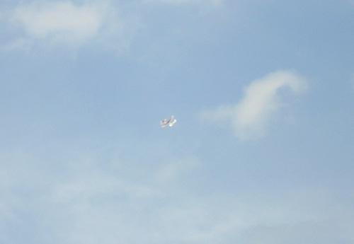コブラワン飛ぶ1