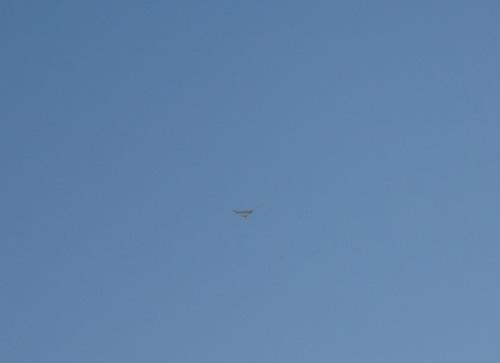 ヤマメS機飛翔