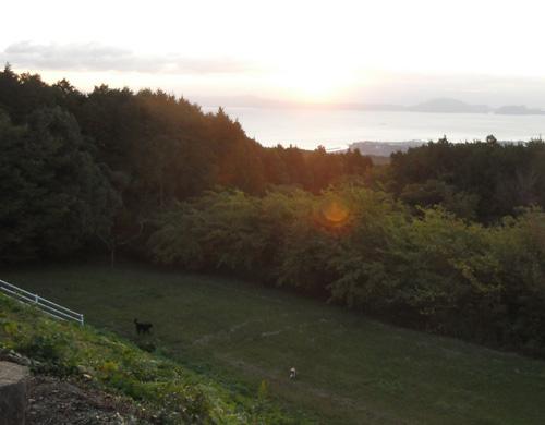 犬と日の出