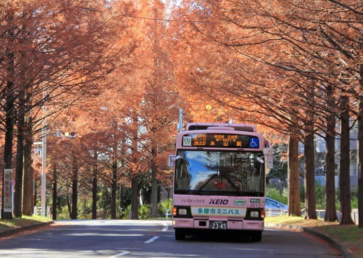 14metasekoia_06.jpg