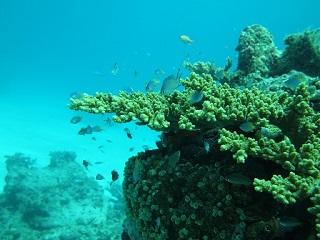 20130709ロックサンゴ&熱帯魚