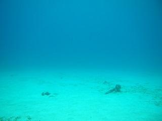20131022沖縄本部海底