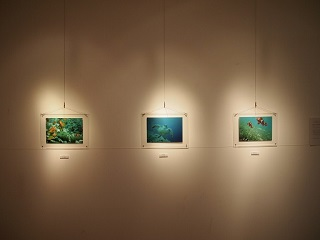 20131031京阪奈海の生物写真