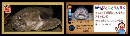 正栄デリシィ 深海ハンター クランチチョコ 深海生物カード No,02 アカドンコ