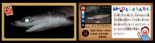 正栄デリシィ 深海ハンター クランチチョコ 深海生物カード No,05 エドアブラザメ