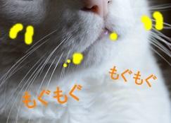 DSC_0010_20130913001034dd4.jpg