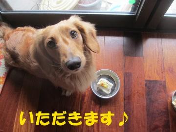 ワンちゃん用ケーキ2