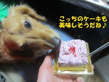 ワンちゃん用ケーキ5