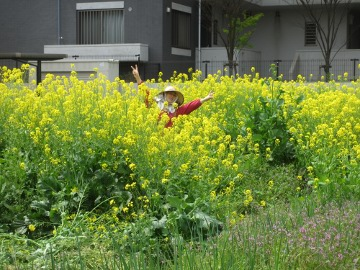 赤タマネギの雑草9
