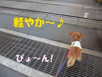 雨止んで散歩4