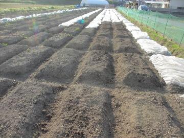 農園残りの作業2