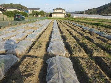 農園残りの作業3