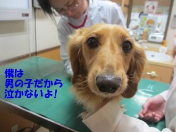 狂犬病予防2