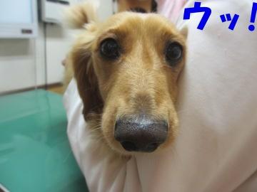 狂犬病予防4