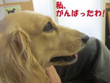 狂犬病予防5
