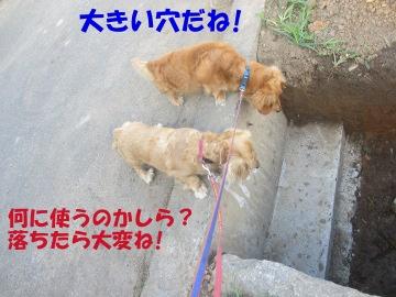 イボ竹結び11