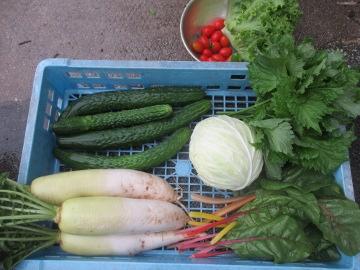 明日の野菜2