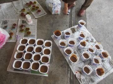 続々の芋苗植えと石鹸作り8