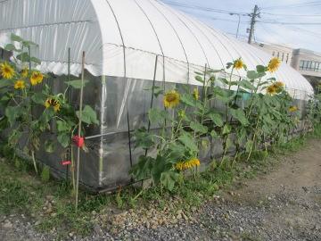 久しぶりの農園5