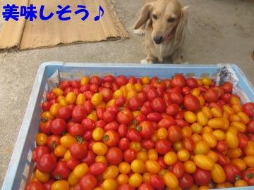 久しぶりの農園14