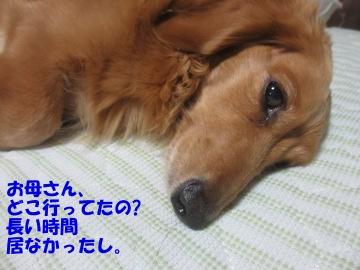 桜島大根の種4