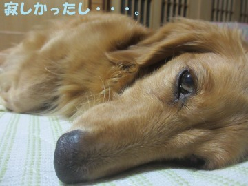 桜島大根の種5