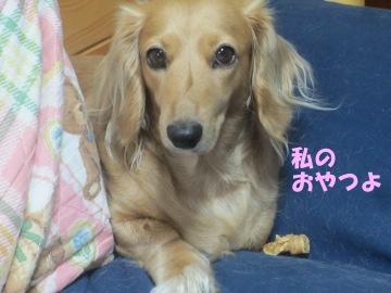 桜島大根の種7