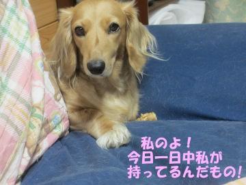 桜島大根の種8