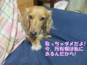 桜島大根の種9