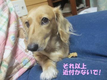 桜島大根の種10