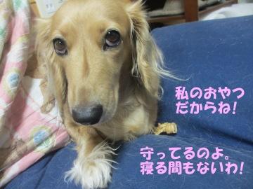 桜島大根の種11