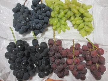 葡萄いっぱい