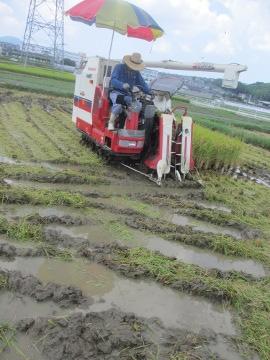 稲刈り~♪6