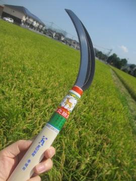稲刈り始めます。