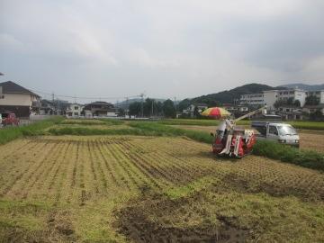 稲刈り始めます。16