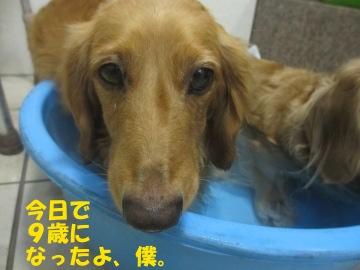 誕生日にお風呂9