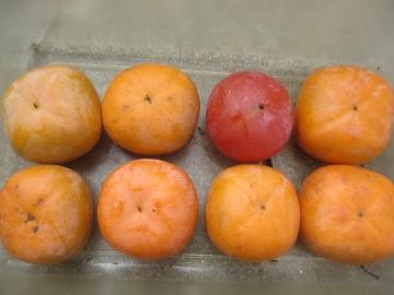 トネ柿が4