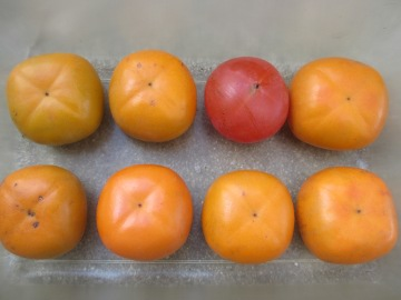トネ柿が5
