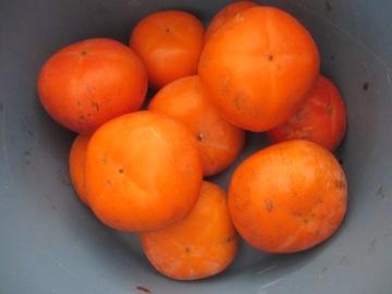 トネ柿終了