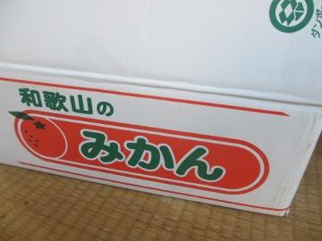 和歌山みかん7