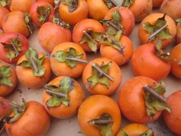 渋柿一部収穫6