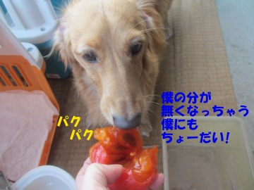 熟柿がうまい4