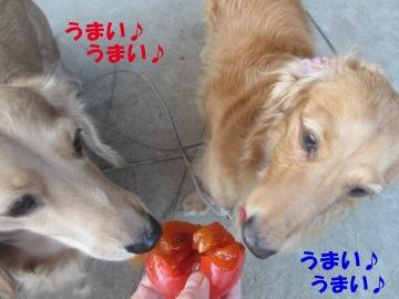 熟柿がうまい5