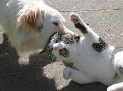 cat00028.jpg