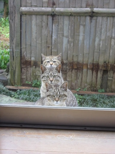 cat00048.jpg