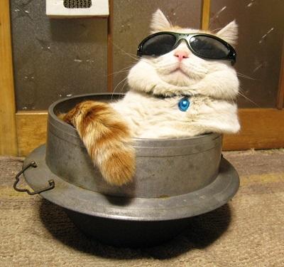 cat00709.jpg