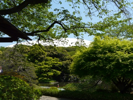 小石川後楽園 新緑 1