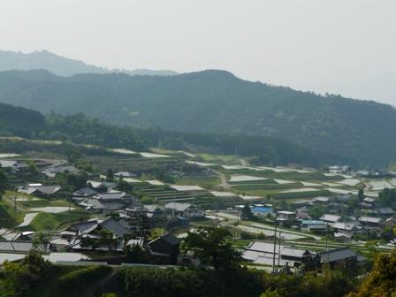 棚田 (東温市上林) 3