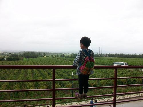 sula_grape.jpg